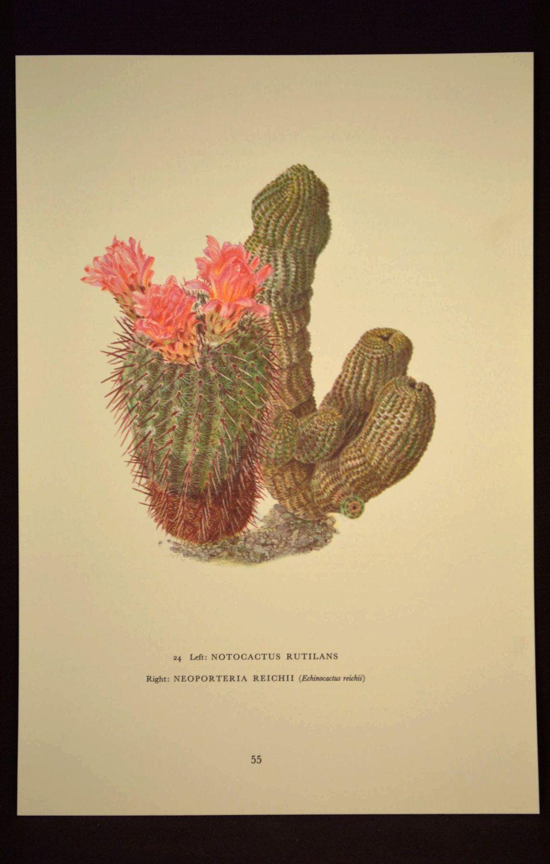 Cactus Wall Art Cacti Print Decor Nature Print Art Botanical ...