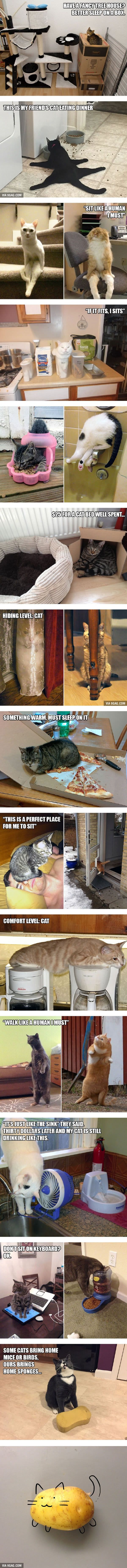 20 Funny Examples of Cat Logic - 9GAG                                                                                                                                                     More