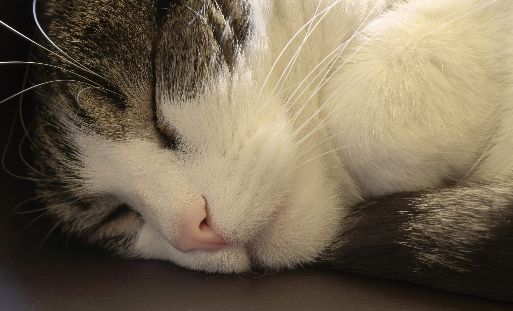 Is My Cat Sleeping Too Much Purrfect Love Cat Sleeping Cats Sleeping Too Much