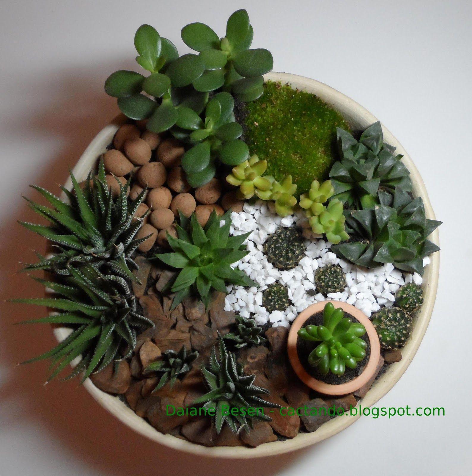 Mini jardim de suculentas e cactus mini garden plantas for Jardines pequenos redondos
