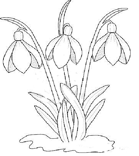 Snowdrop Flower Drawing Flower Drawing Design Spring Coloring Pages