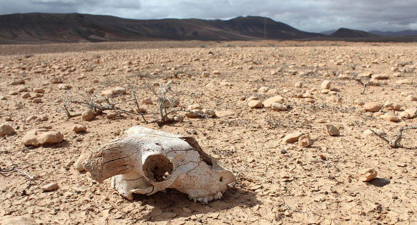 Resultado de imagen para extincion