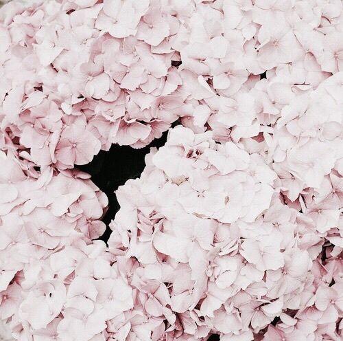 Pin de becca en floral | | Pinterest | Las flores, Flores y Flor