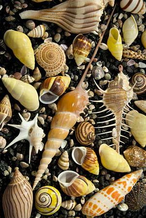 Shells from the Sea......