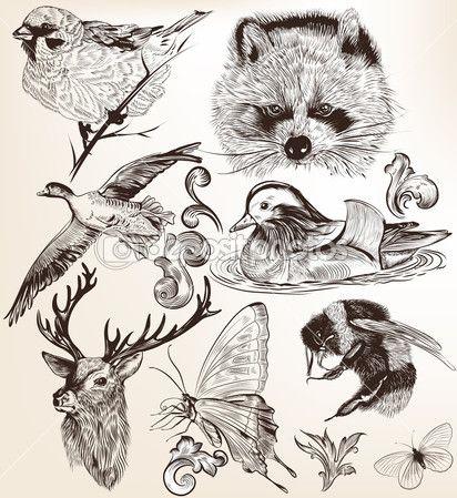 colección de animales de alta vector detallado para el diseño ...