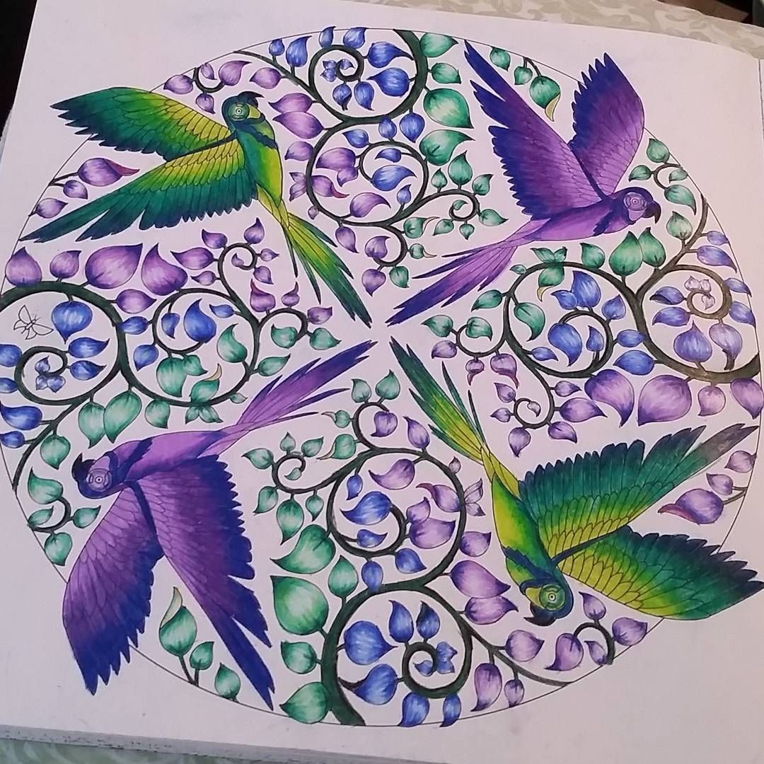 Love This Page Magicaljungle Johannabasford Parrots