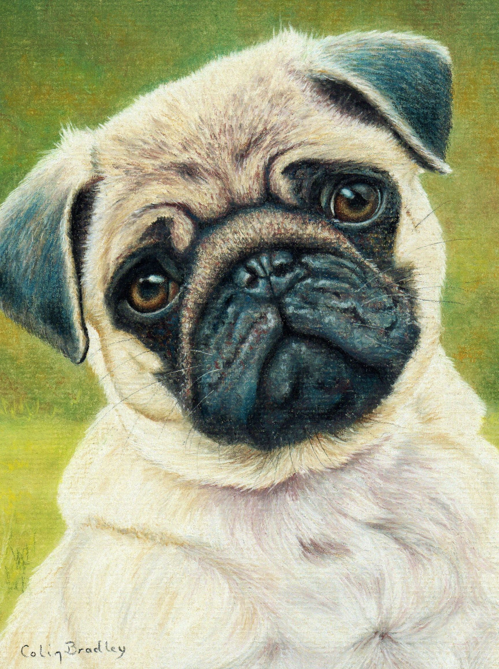Draw These Animals Using Pastel Pencils In 2020 Animal Drawings
