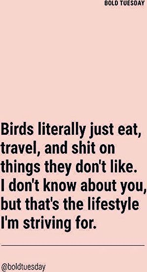 Photo of 46 Ideas Travel Quotes Funny Hilarious Faces