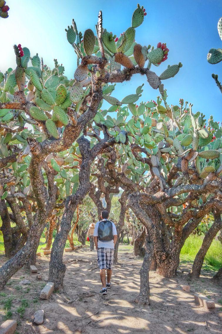 El Coporo Ocampo Guanajuato México Wishlist Been There