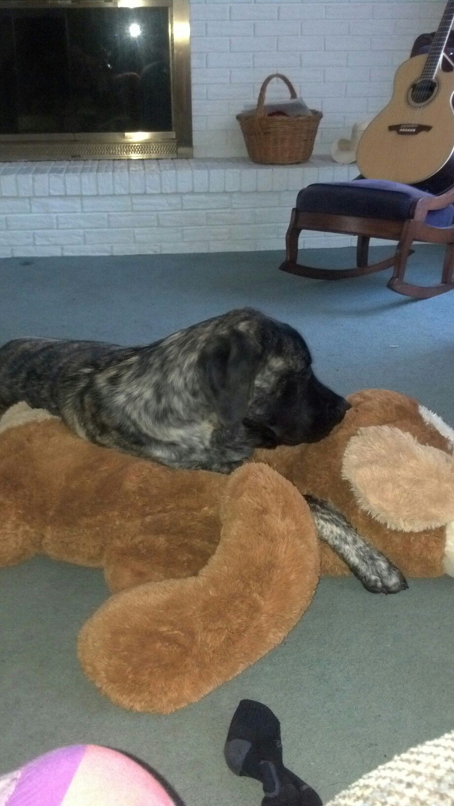 Brutus u his new baby my ponies and pets pinterest