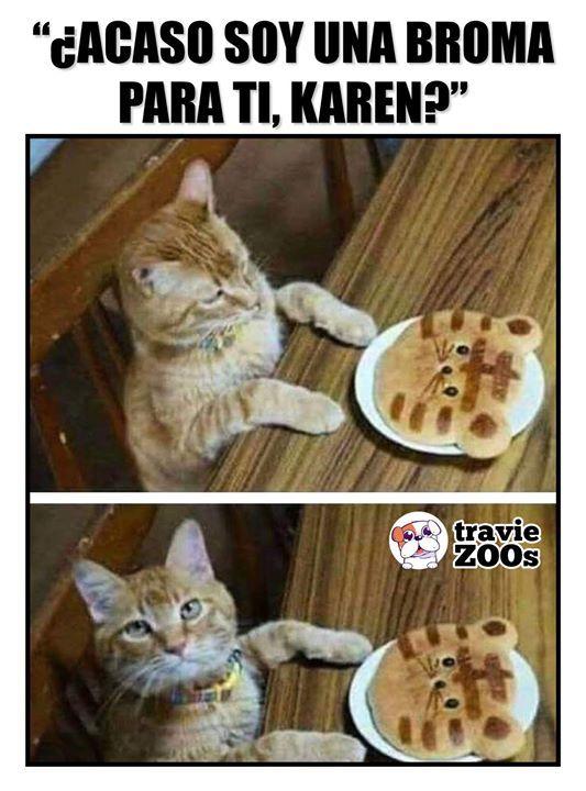 No Te Puedes Tomar Nada En Serio Memes Graciosos De Animales Memes De Animales Divertidos Memes De Perros Chistosos