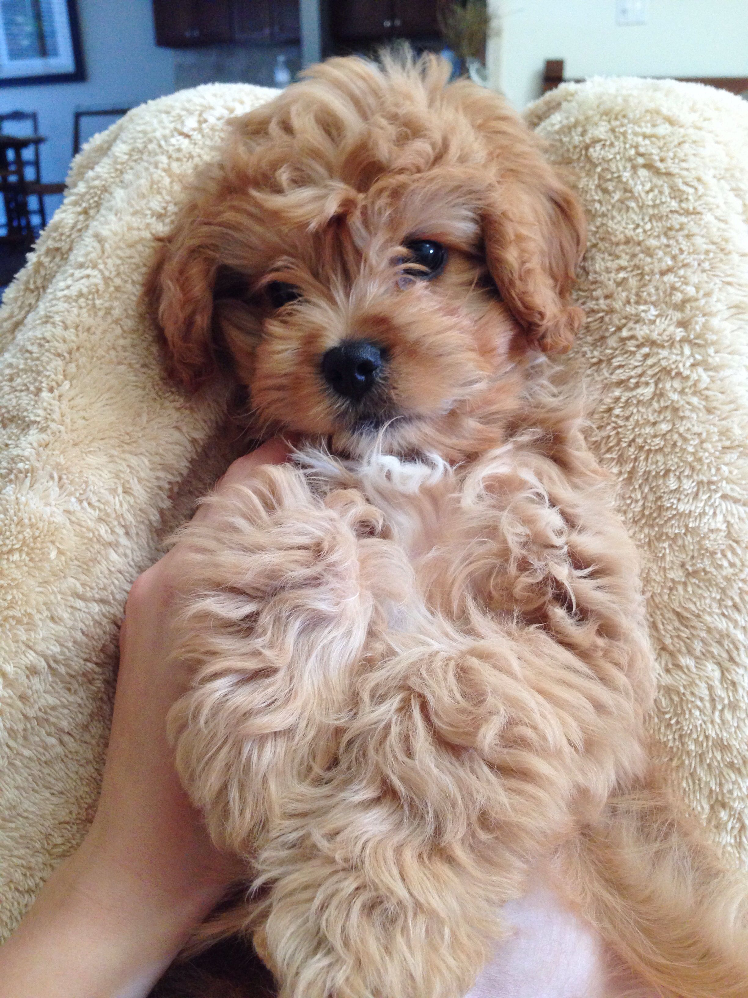 Pin By Kaylyn Cole On Little Things Cute Baby Animals Puppies Best Dog Breeds