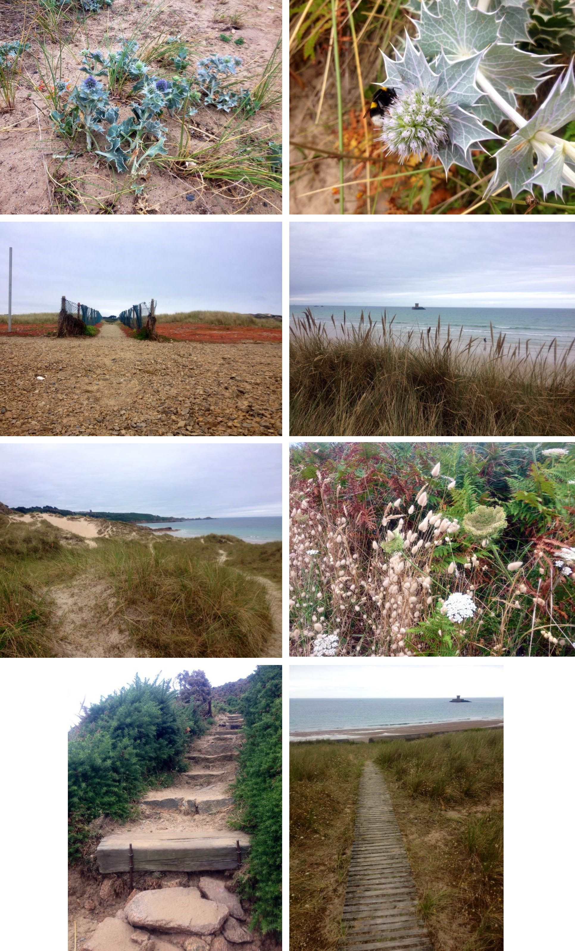 Walk 17 July 2015 #Jersey #Stouensbay #coastalplanting # ...