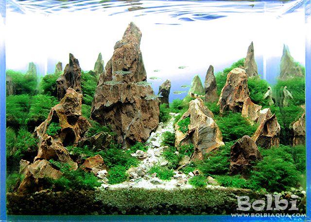 Aquascape Ideas Dragon Stone Aquascape Ideas