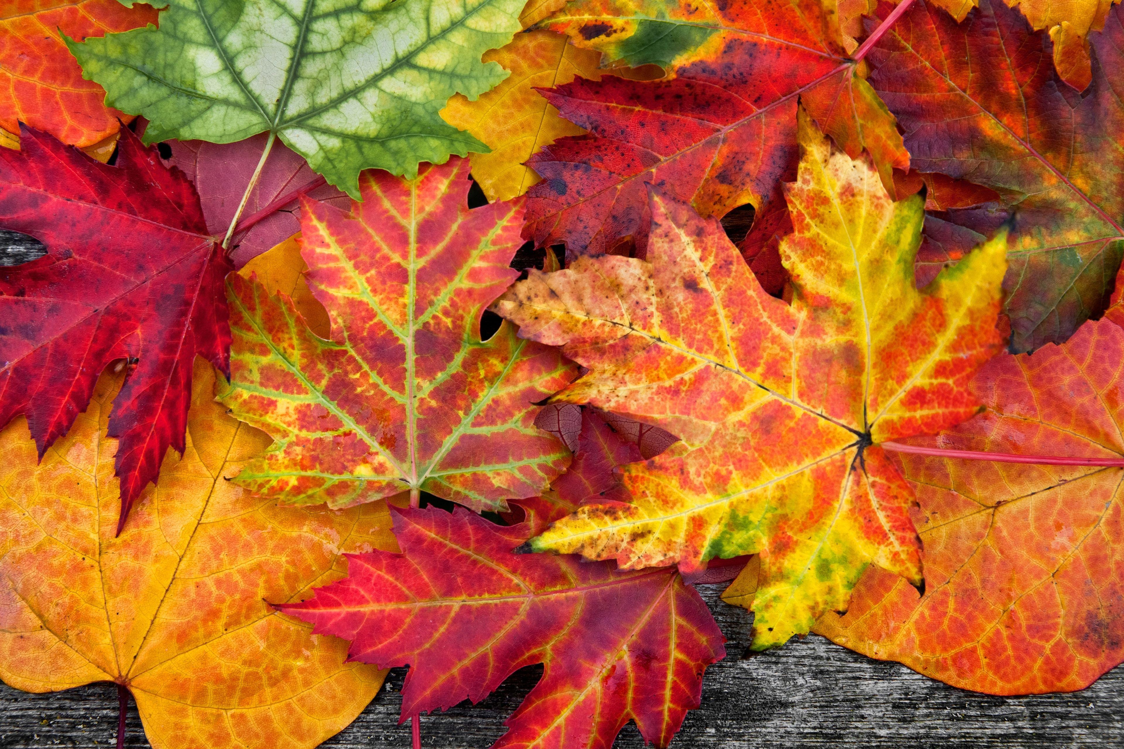 Смотреть картинки осеннего листа