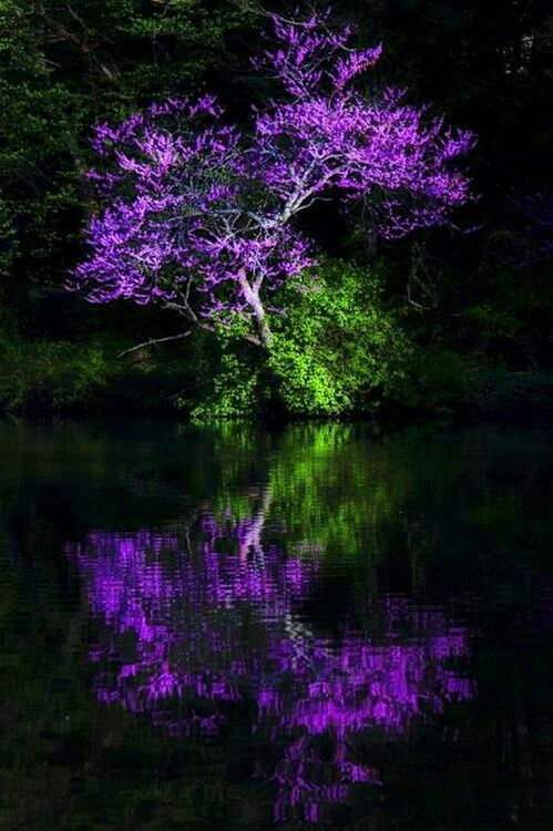 Love Purple With Images Nature Pictures Beautiful Landscapes Beautiful Nature