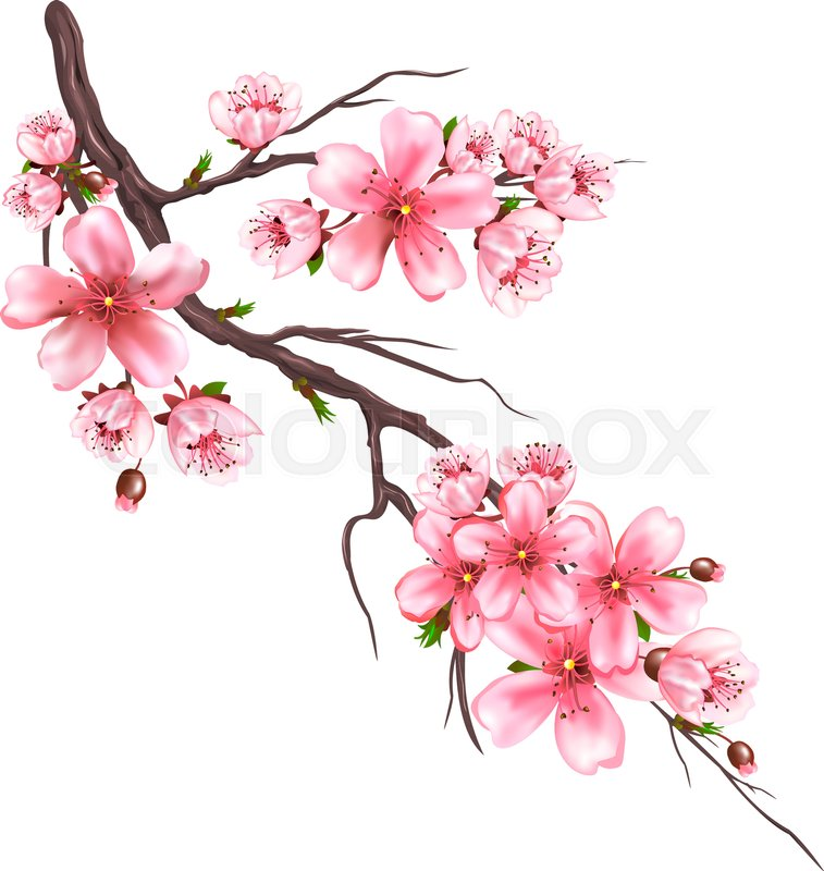 Pin By Emira Hasic On Pintura Floral In 2021 Cherry Blossom Art Cherry Blossom Drawing Flower Drawing