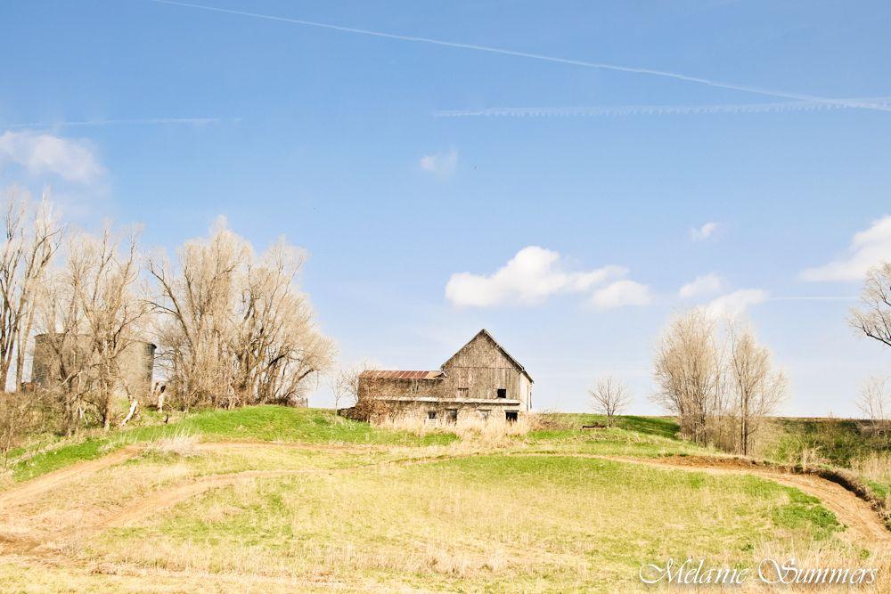Vine covered barn near Wathena, Kansas