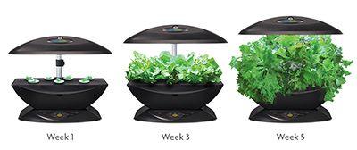 Indoor Plant Growing With Revolutionary Aerogarden 7 400 x 300