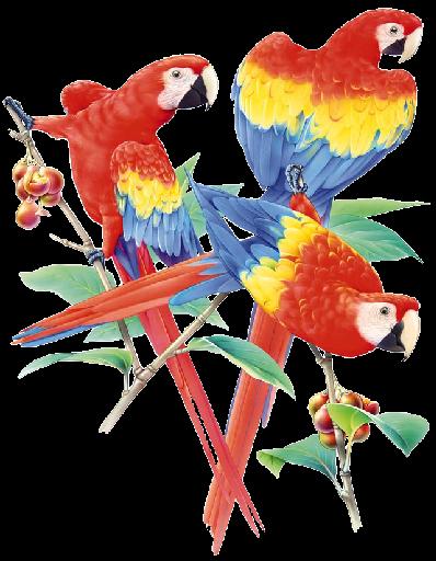 Perroquets Dessin Perroquet Art A Theme Oiseau Peinture Oiseau