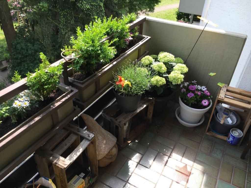 Tolle Idee für eine gelungene Balkonbepflanzung alte Obstkisten