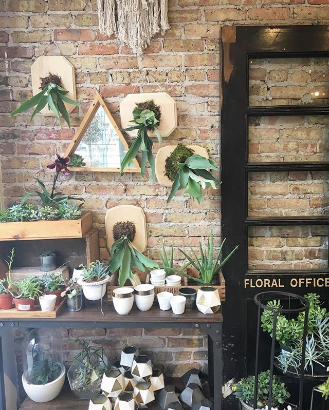 In case you weren't able to make our staghorn fern class yesterday because you were at the #womensmarch, we've added a second date!  Saturday the 28th!  Link in profile!! 🌿