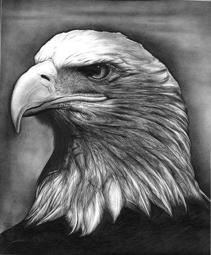 A Bald Eagle Portrait Pencilworksstudio Drawing On Artfire