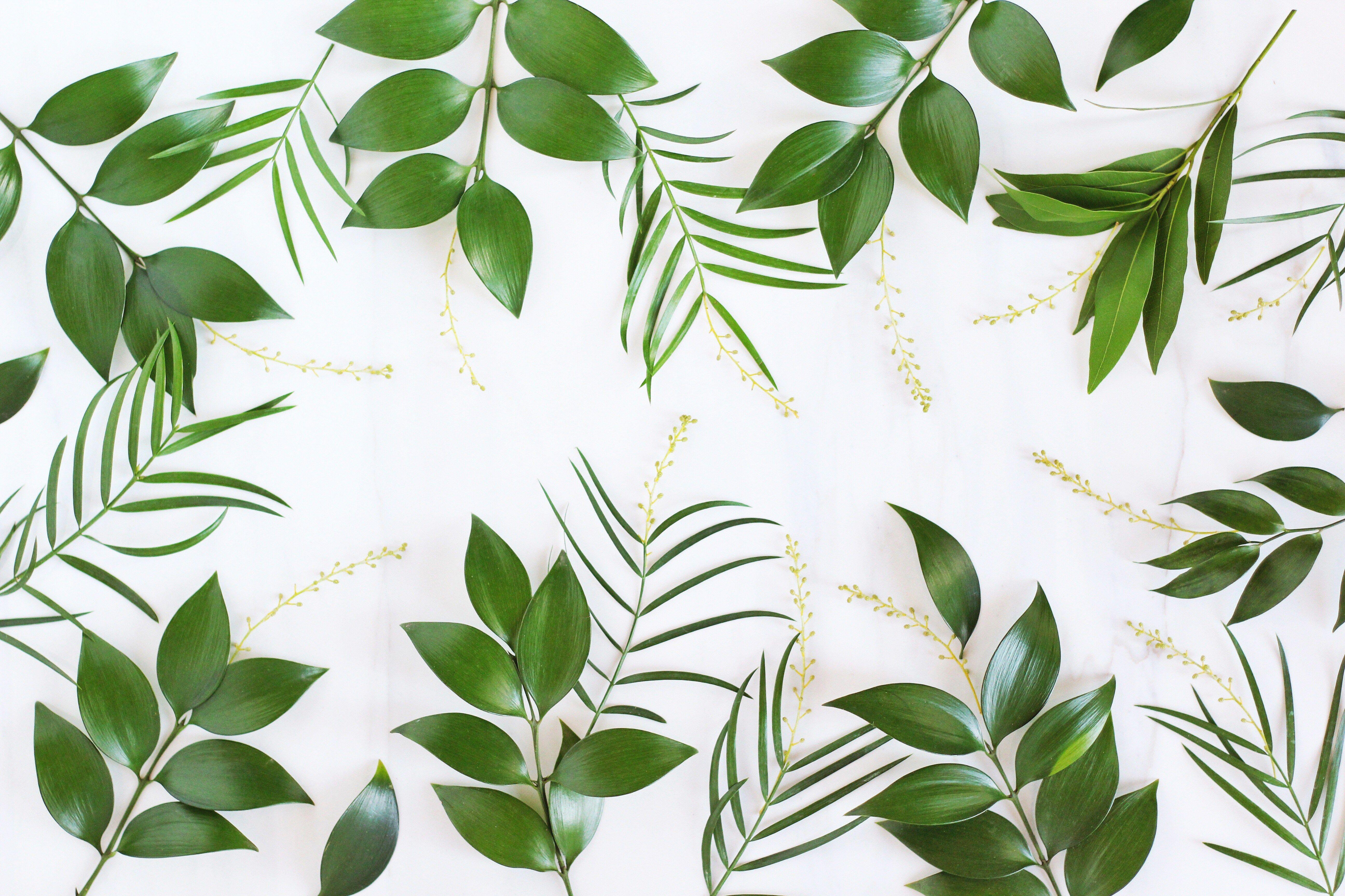Digital Blooms March 2017 Free Desktop Wallpaper Greenery Wallpaper Computer Wallpaper Desktop Wallpapers