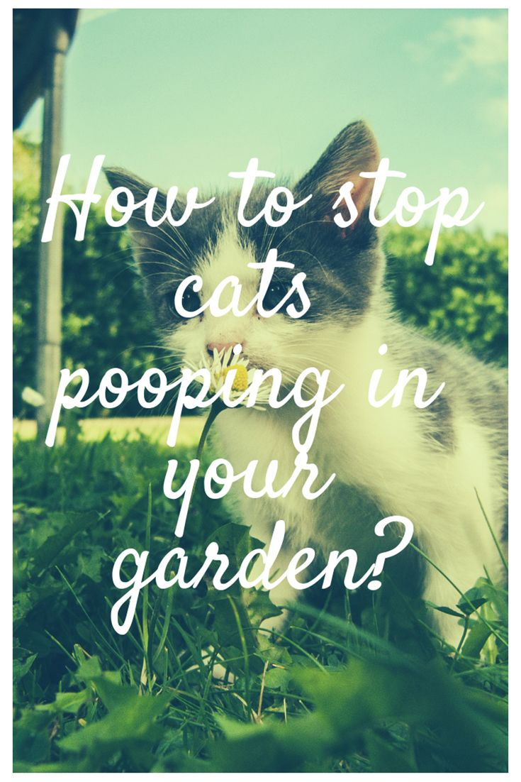 How to stop cats pooping in your garden? Cat pooping on