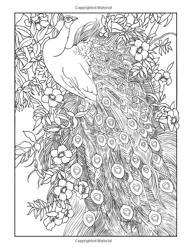 Creative Haven Peacock Designs Coloring Book 01
