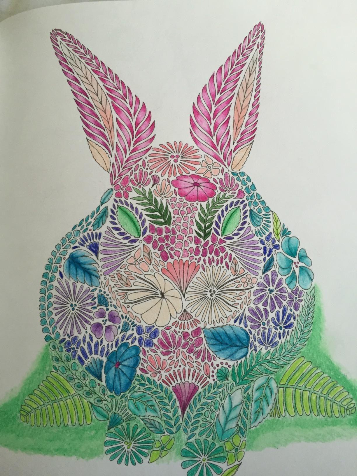 Color me draw me animal kingdom book - Animal Kingdom Color Me Draw Me Millie Marotta 9781454709107 Amazon