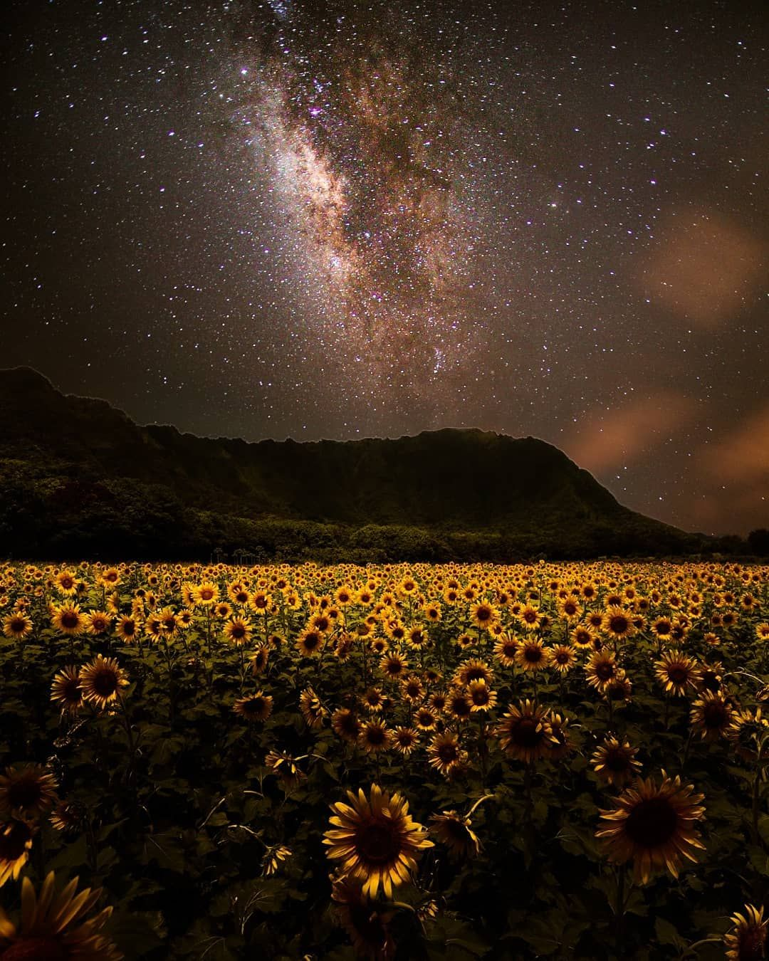 Isn't this what you would imagine what a sunflower field ...