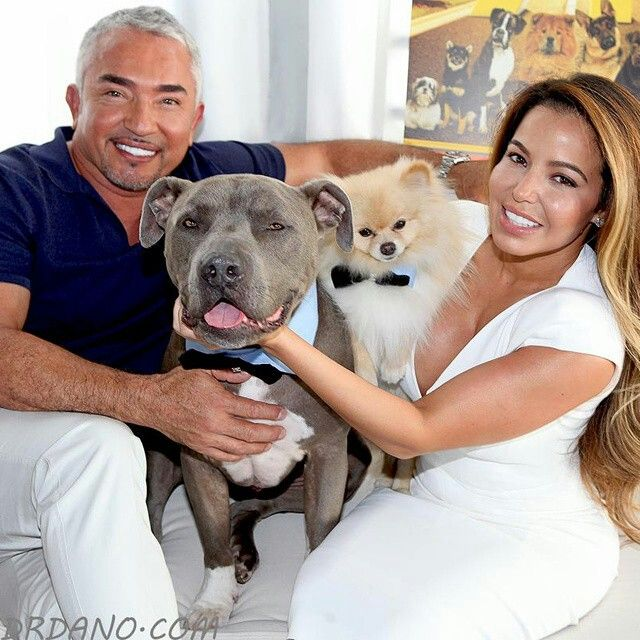 Pin By Lisa Fultz On Cesar Millan Dogs Animal Tv Beautiful Dogs