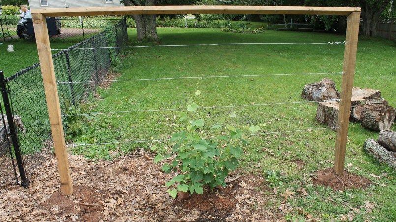 Building A Wire Trellis Diy Garden Trellis Vine Trellis Grape