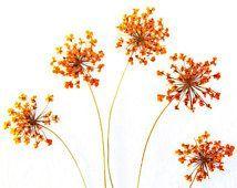 Orange Ammi Queen Anne's Spitzenblumen mit Stiel Echte getrocknete und gepresste…