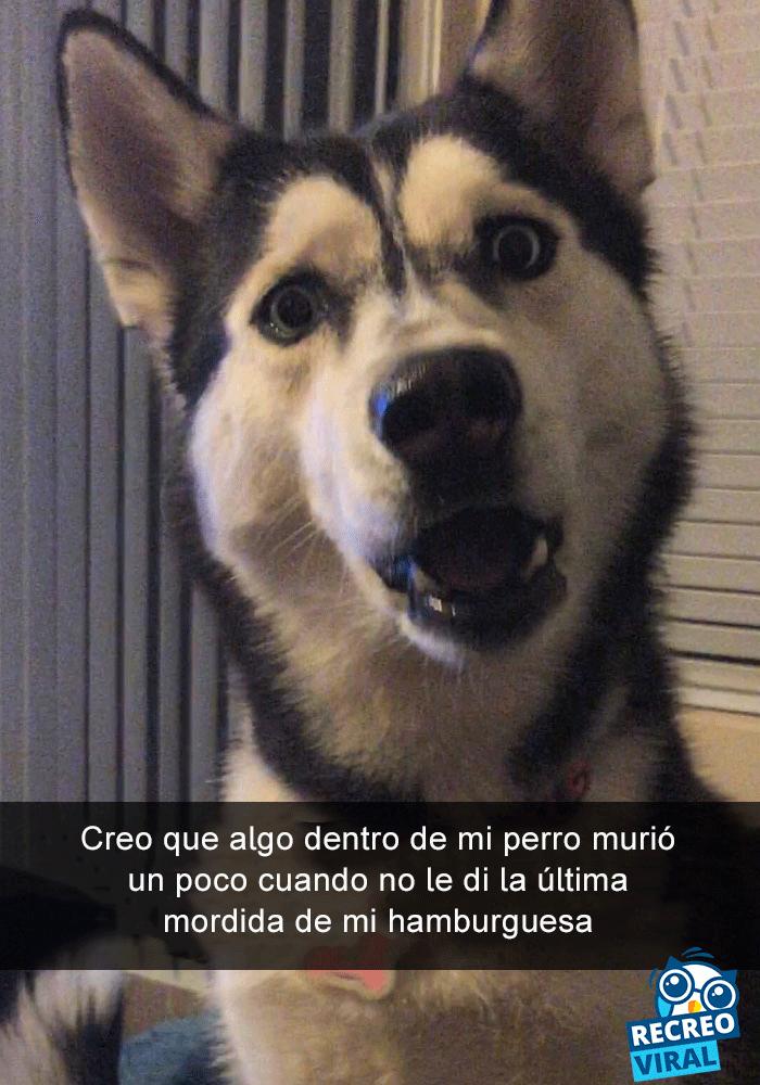 29 Perros En Snapchat Que No Tienen Idea De Lo Divertida Que Hacen Nuestra Vida Perros Graciosos Perros Animales