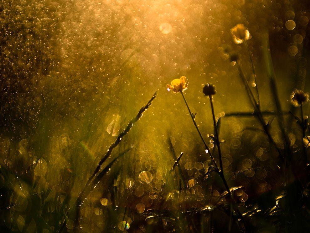 Picture of grass and flowers after a rainstorm