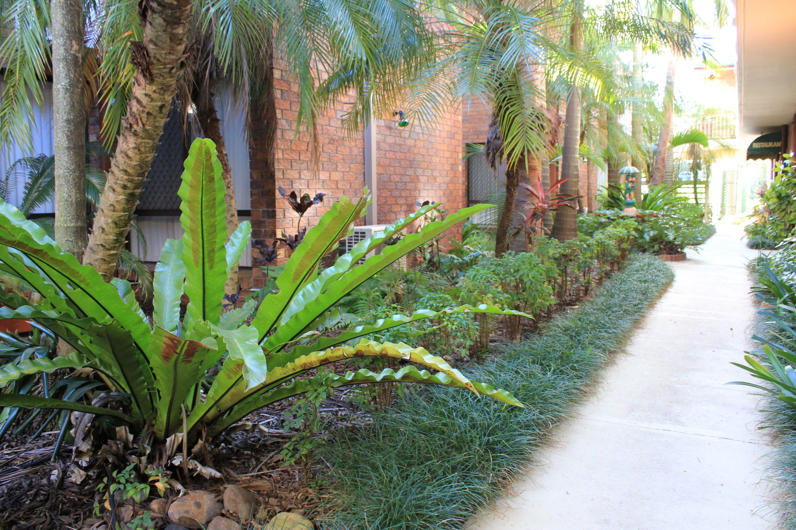 Informal tropical landscape design ideas florida for for Landscape gardeners brisbane