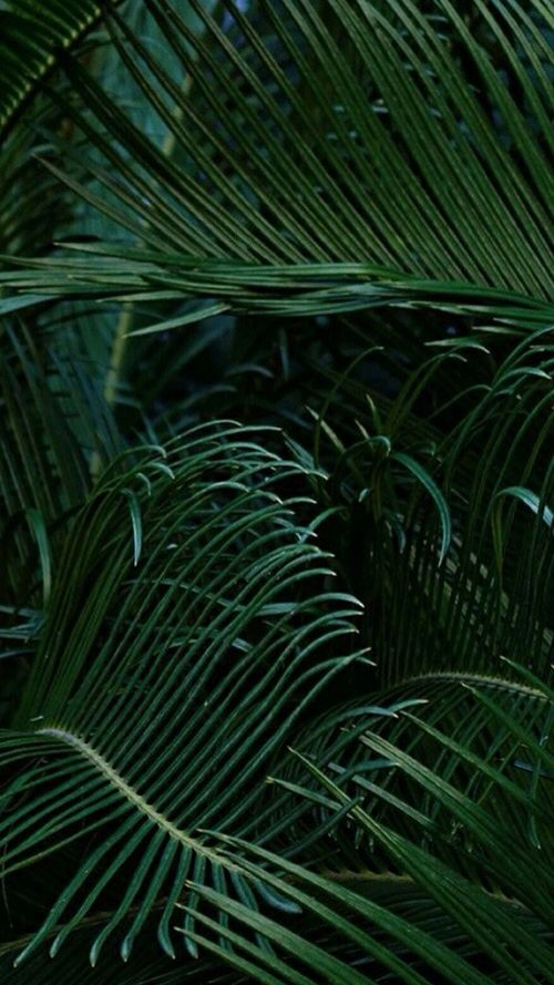 Tumblr Plant Wallpaper In 2019 Plant Wallpaper Green