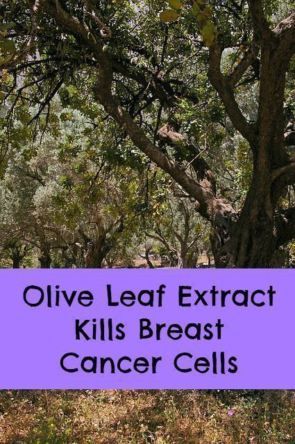 breast Leaf extract