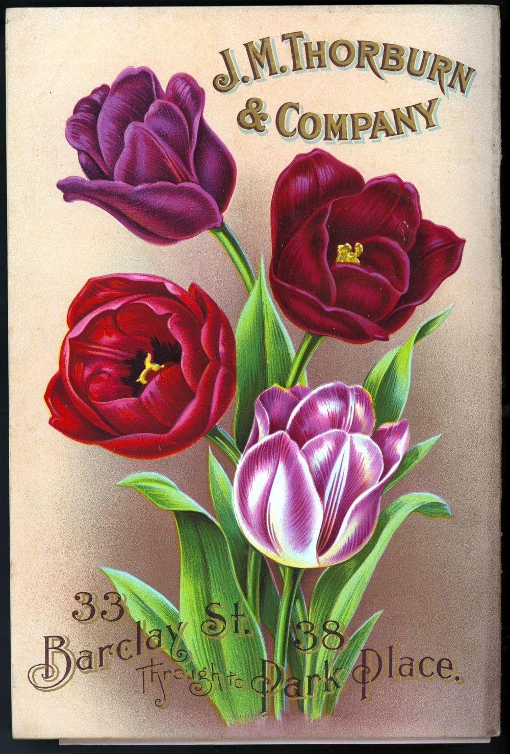 Tulips Flower Seeds Packets Vintage Seed Packets