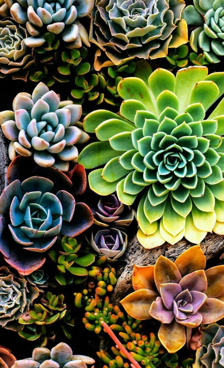 Succulents! Sukkulenten, Pflanzen, Bunte sukkulenten