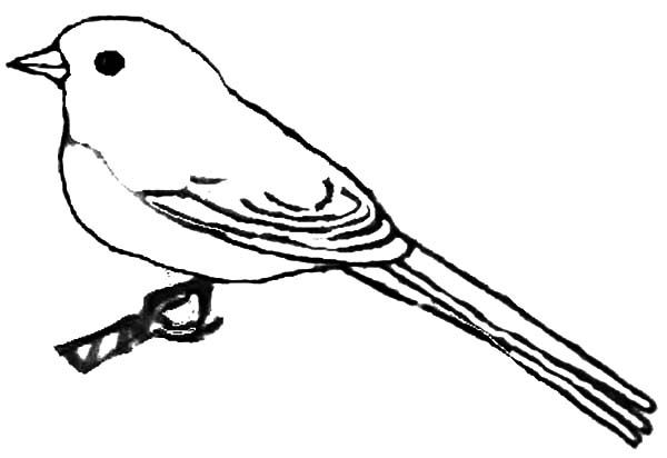 Coloring Pages For Young Learners : Kids draw of junco bird coloring pages batch coloring winter
