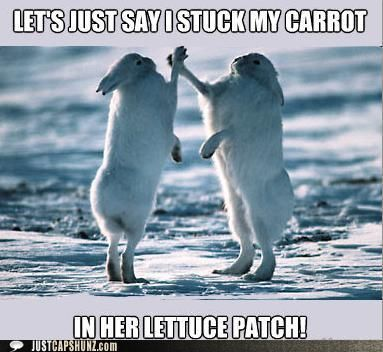 Funny animal pictures with captions for adults - photo#40