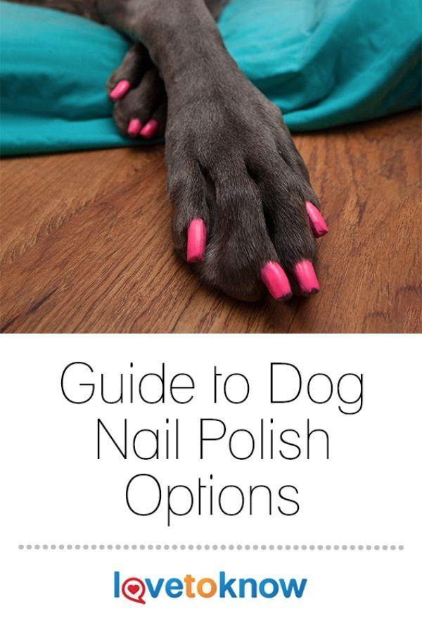 Guide To Dog Nail Polish Options Dog Nails Dog Grooming Dog Toenails