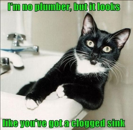 I M No Plumber But It Looks Like You Ve Got A Clogged Sink Any Clog Or Leak There S Evergreen 401 921 1971 Meme Plu Funny Cats Cats Funny Cat Pictures