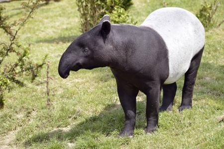 A Really Stunning List of 20 Animals That are Black and