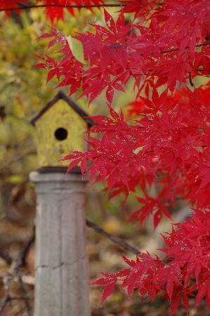 Lancaster Pa Bird Houses Fall Colors Fall Thanksgiving