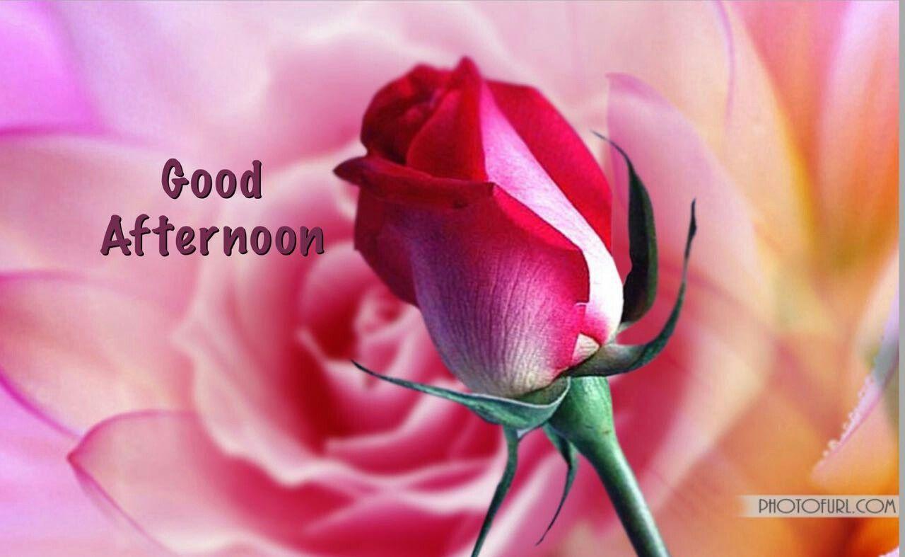 Pin By Maya Kavitha Abdullah On Good Afternoon Pinterest