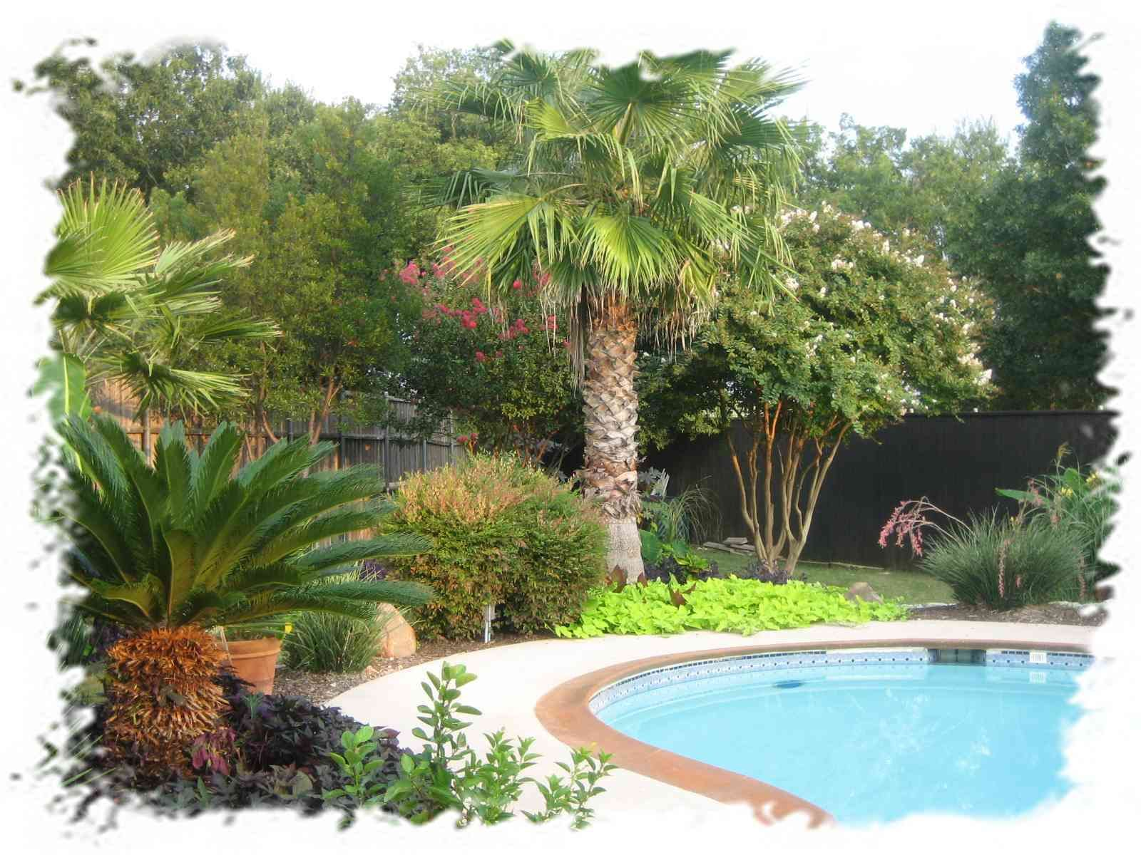 Phoenix backyard trees google search how does your for Tropical pool gardens
